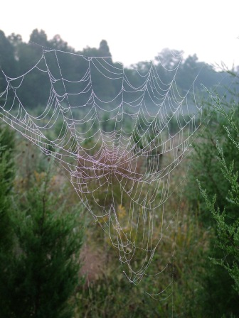 Spider web