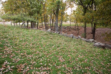 Neils lawn with leaves