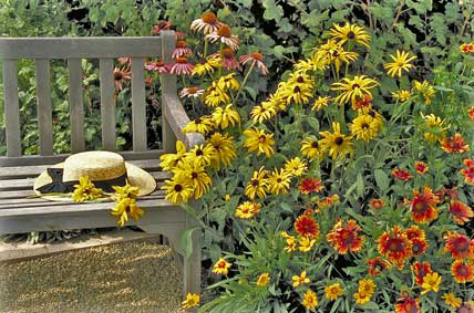 garden bench with wildflowers