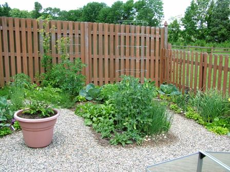 Shadowbox and picket fences around kitchen garden June 22 07