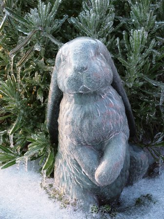 Ice-Covered Bunny and Lavender Dec 17 07