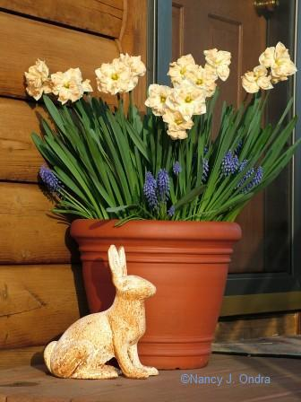 White Bunny with Bulbs May 06