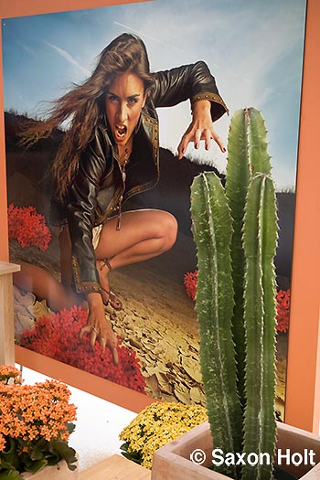 leather girl cactus