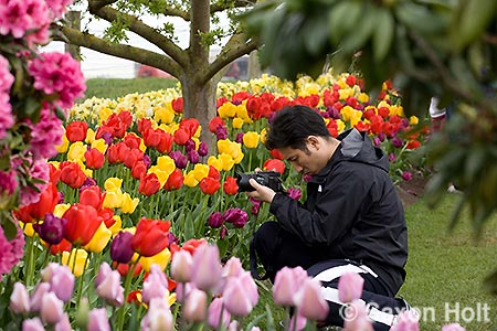 man composing tulip photo