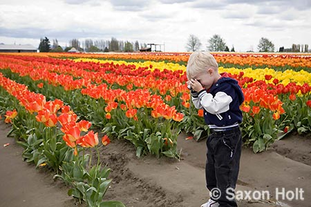 child composing tulip photo