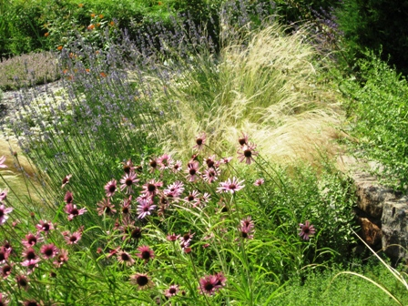 echinacea-and-grasses-chanticleer-708-resized