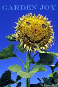 Garden Joy sunflower