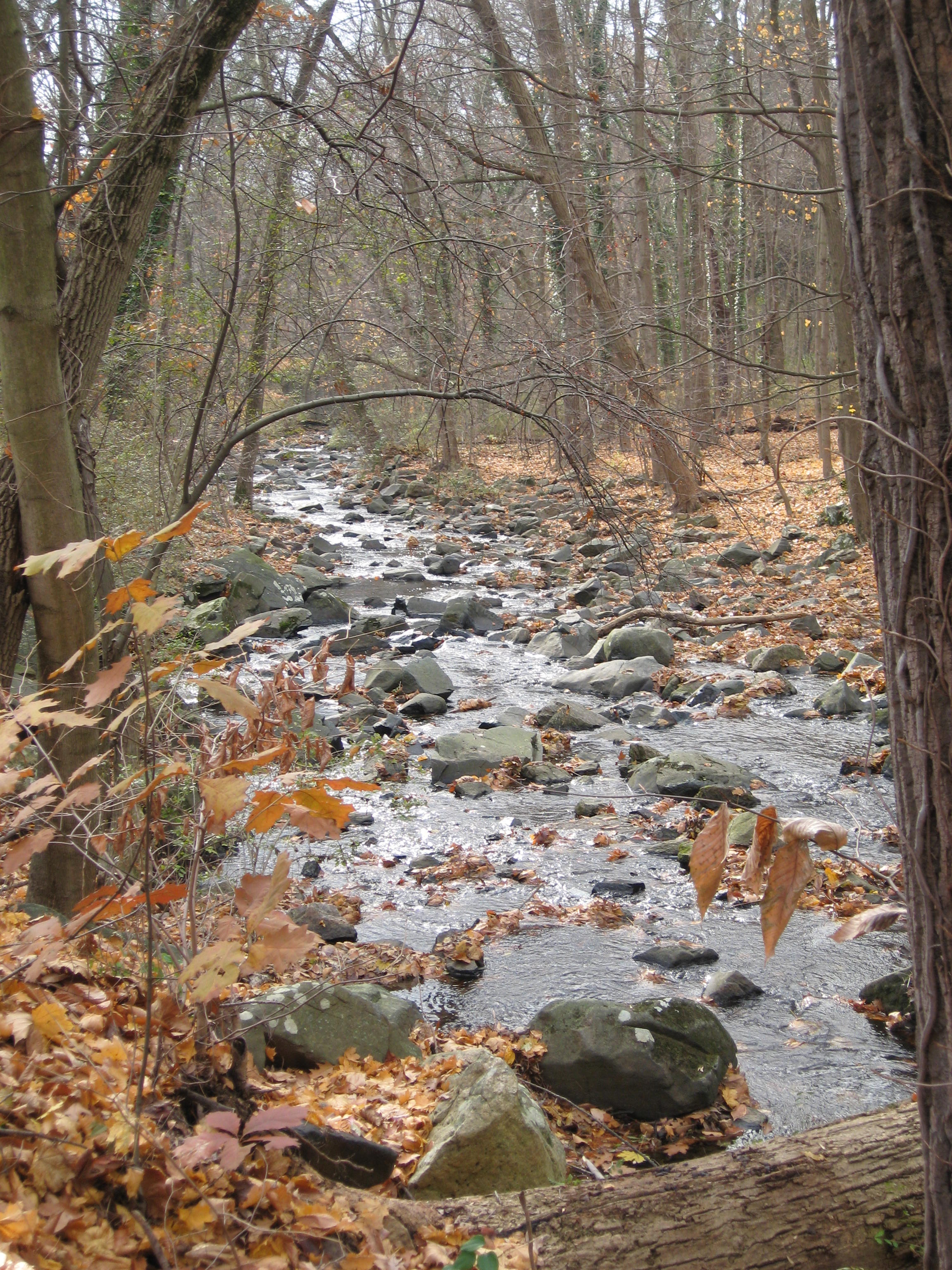 radnor-stream-in-fall