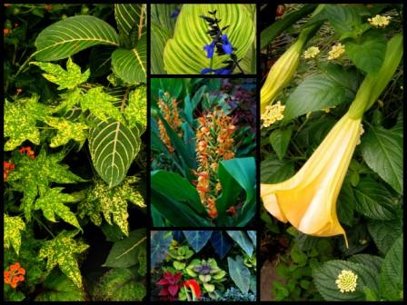overwinter a host of plants in my cold dark basement every year i