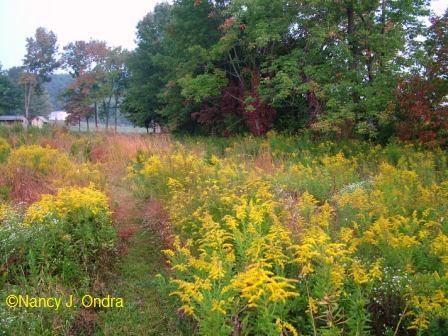 upper-meadow-back-corner-early-october