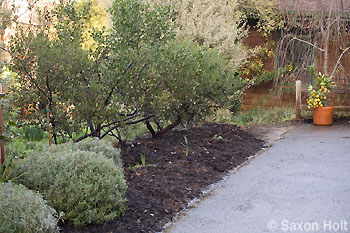border_mulched
