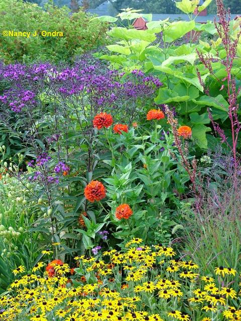 zinnia-aztec-orange-vernonia-catalpa-atriplex-rudbeckia-aug-25-07
