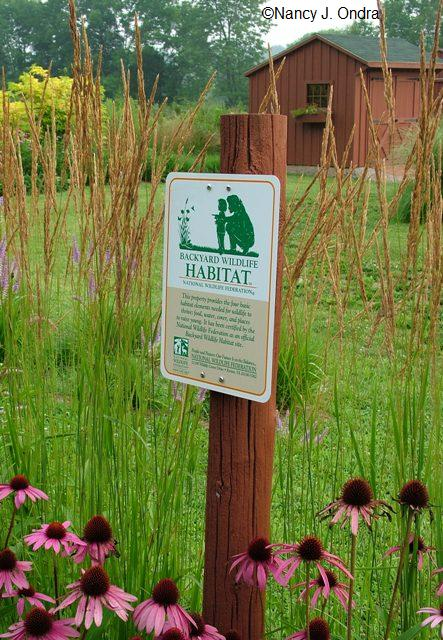 habitat-sign-echinacea-calamagrostis-kf-july-19-07