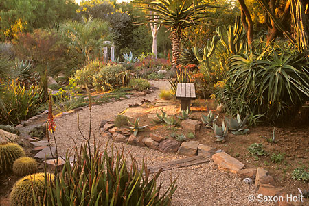 Patrick Anderson's garden