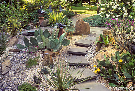 Eve Thyrum's hardy succulent garden
