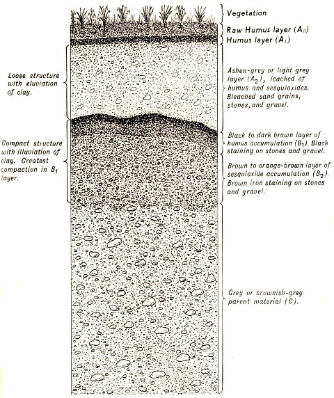 soil-profile