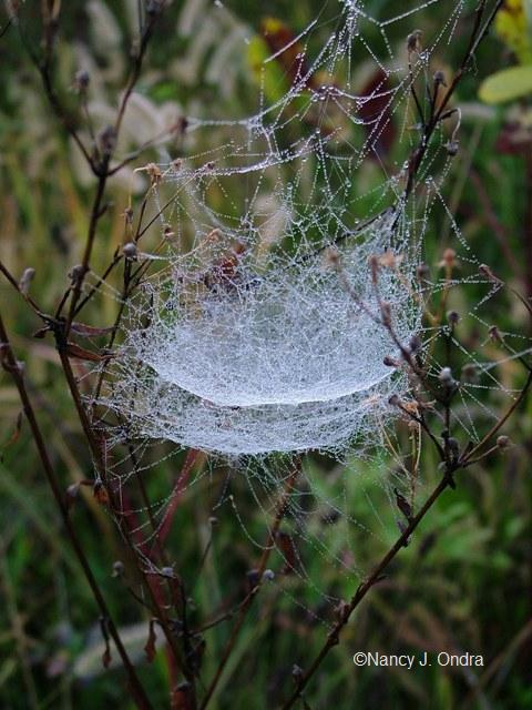 spider-web-4-sept-21-07