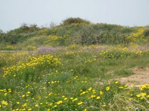 wildflowers-leading-to-beach-7-resized