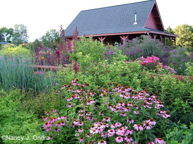 Wild Backyard Garden : Design Workshop ? Front Yards Revisited (Nan at Gardening Gone Wild
