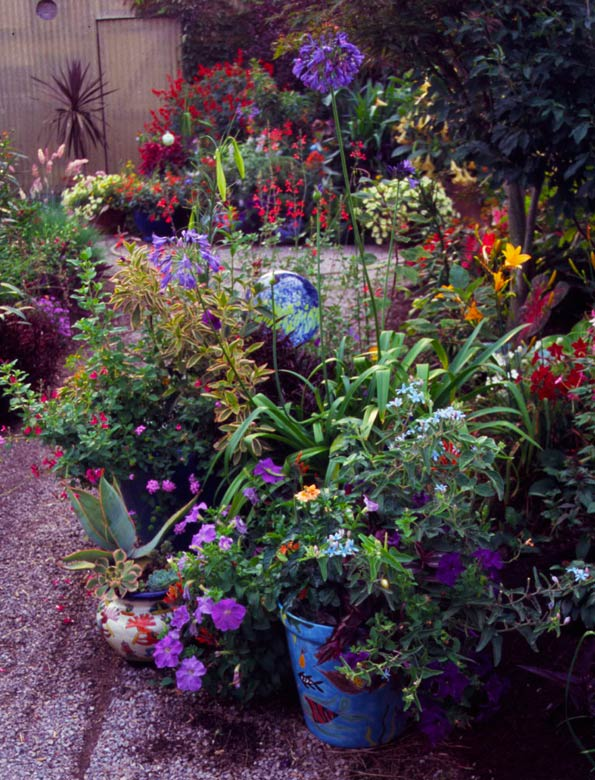 Talavara containers in entrance garden. Plantings include: Agapanthus 'Elaine', Petunia 'Aladdin Nautical Mixture', agastache and salvias. Image courtesy Cottage Garden.