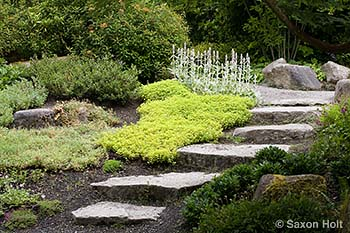 path in Bellevue groundcover garden