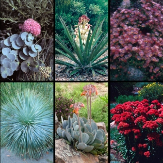 Gardening-Gone-Wild-070209-High-Country-Gardens-July-2009-prize-for-Picture-This.jpg-resized