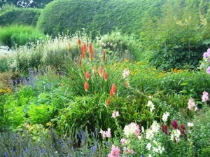 Jock Christie- kniphofia towards front of border-resized