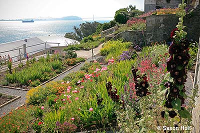 Alcatraz gardens in the ruins