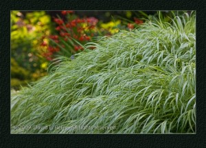 Ornamental Grass-David Perry.jpg-resized