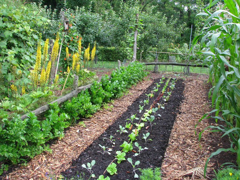 From Gardener to Farmdener - Grow It Blog - MOTHER EARTH NEWS