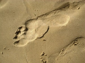 footprint-resized