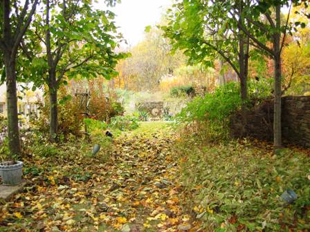 11905-fall garden-tilia cordata walkway.jpg-resized