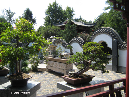 Chinese garden, bonsais copy