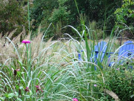 October 2005 blue chairs, grasses and zinnias.jpg-resized
