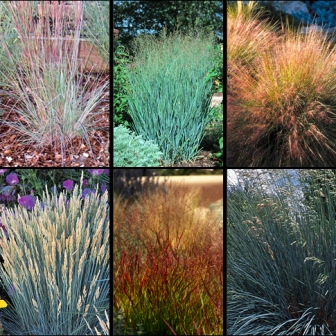 OrnamGrassGGW[1].jpg-HCG Grass Collage for Sept. Picture This Photo Contest.jpg-resized