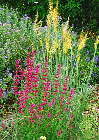 Pictures of Native Grasses and Plants