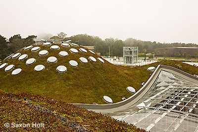 Green roof Academy of Sciences