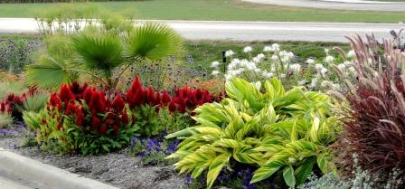 Shell ginger (Alpinia zerumbet) with Pennisetum 'Fireworks', Cleome 'Spirit Frost', Petunia 'Easy Wave Blue', Celosia argentea 'Fresh Look Red', Washingtonia robusta, Verbena bonariensis, Cyperus papyrus.
