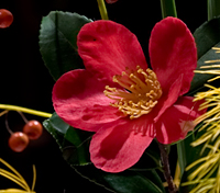 Bouquet_Camellia_crop