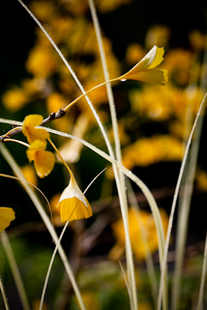 PhytoPhoto-yellow flowers-resized