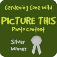 picture_this_silver