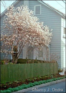 Emmaus garden Spring 97
