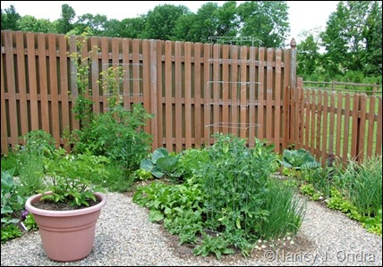 Kitchen garden fences June 22 07