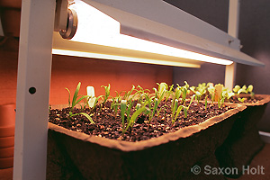 seedling sprouting under grow light