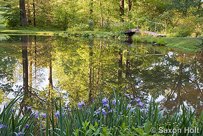 Mt Cuba pond with dawn reflections on water in woodland garden
