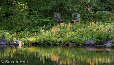 Dappled sunlight at edge of pond garden