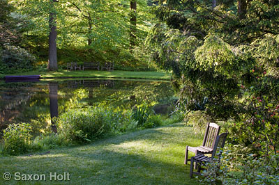 Chairs by pond in woodland garden