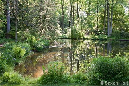 Mt Cuba Center pond morning light woodland garden