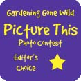 GGW Editor's Choice Award