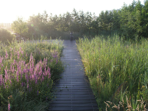 Locus flavum garden in Holland -walkway-resized